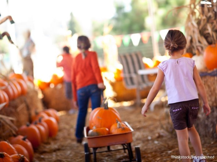 Children at a pumpkin farm enjoying a fall festival in the Buffalo, NY, area